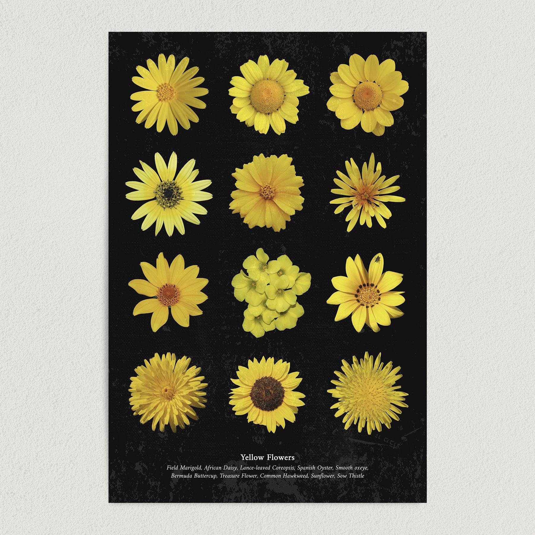 Yellow Flowers Art Print Poster 12″ x 18″ Wall Art GC3001