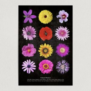 "Colored Flowers Art Print Poster 12"" x 18"" Wall Art GC3002"