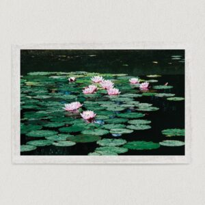 "Lily Pads In The Pond Art Print Poster 18"" x 12"" Wall Art MN2309"