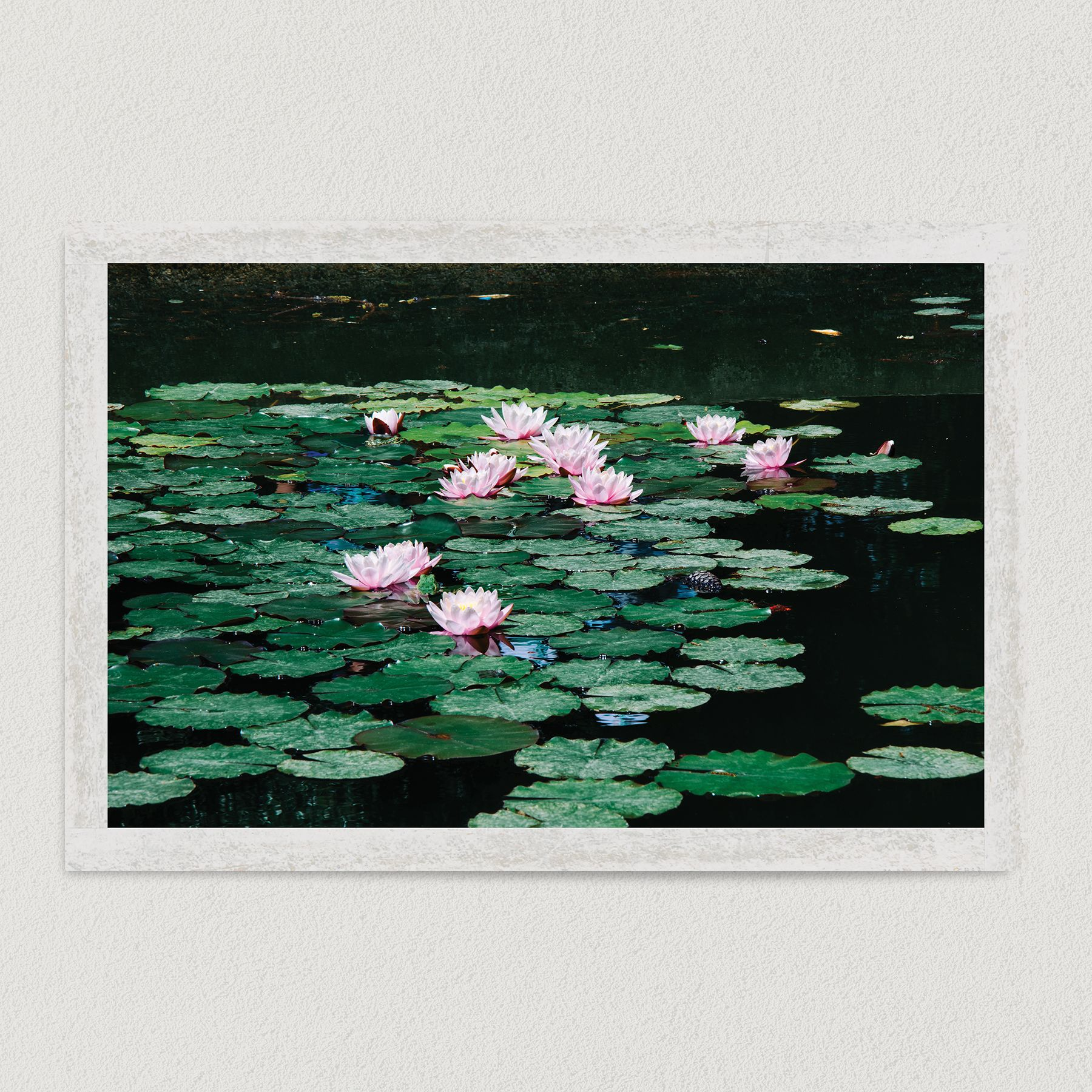 Lily Pads In The Pond Art Print Poster 18″ x 12″ Wall Art MN2309