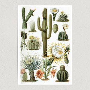 "Cacti Chart Art Print Poster 12"" x 18"" Wall Art N1113"