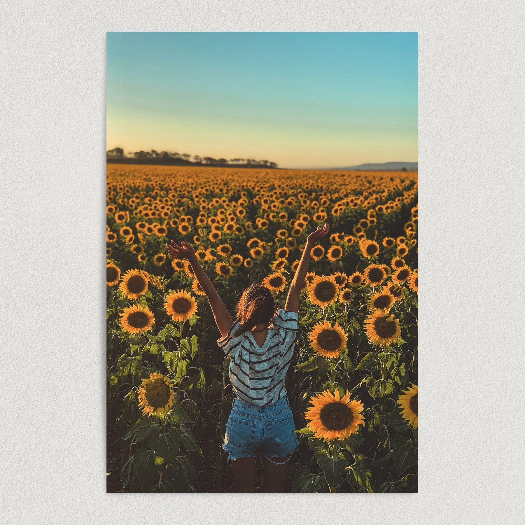 Fields of Sunflowers Rays of Sunshine Summertime Art Print Poster N1011