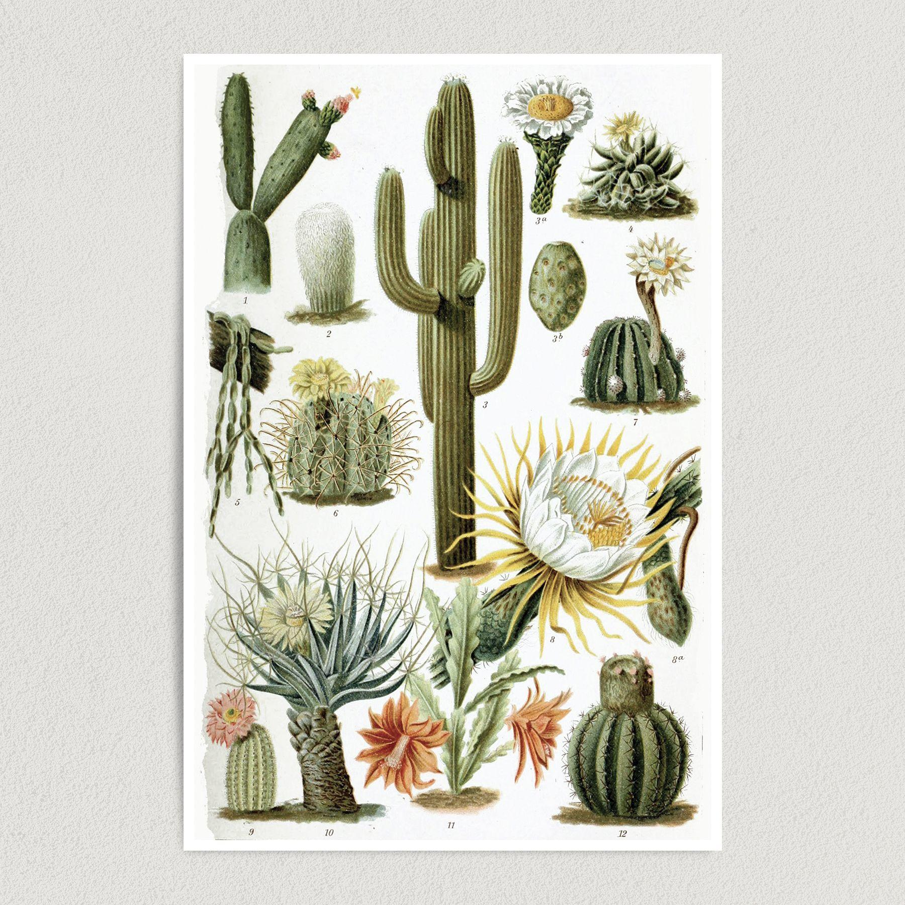 Cacti Chart Art Print Poster 12″ x 18″ Wall Art N1113