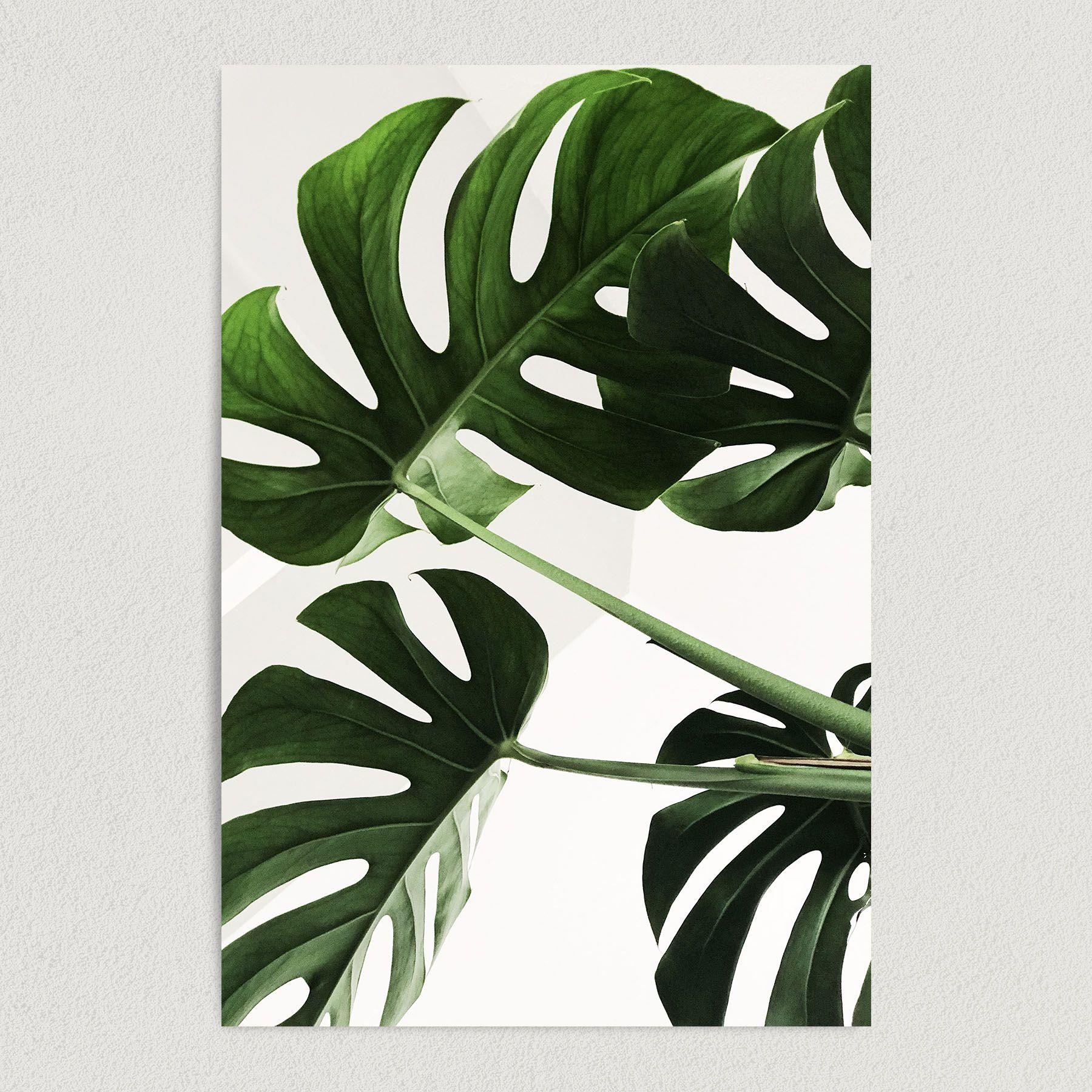 Tropical Jungle Banana Leaves Palm Fronds Art Print Poster N1015